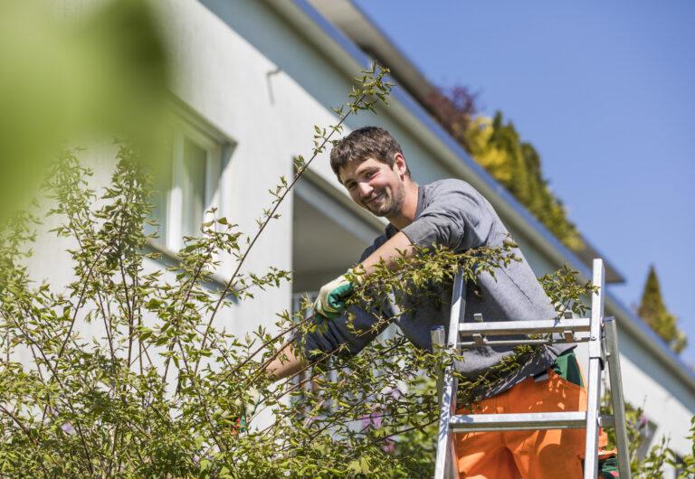 Pflegen Bäumeund Sträucher