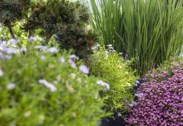 Service Pflanzenschutz